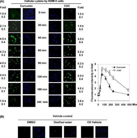 Cyclodextrin-complexed curcumin exhibits anti-inflammatory and antiproliferative activities superior to those of curcumin through higher cellular uptake