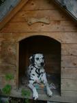 A kutyánk, Jenny B1