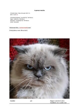 A gonosz macska szólista